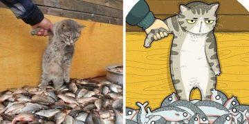 cat memes illustration